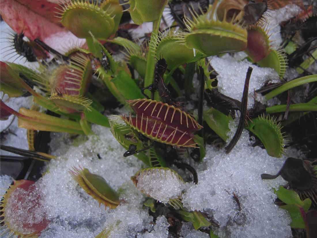 Sinek kapan dormancy kış bakımı